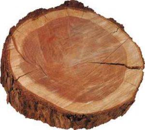 Опасная древесина