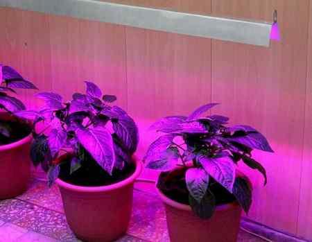 Какие лампы нужны для выращивания растений
