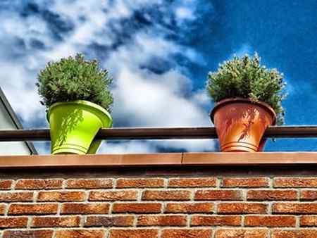 Лампы для выращивания растений - что это такое?
