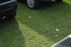 Экологическая парковка: зачем укладывать георешетку?